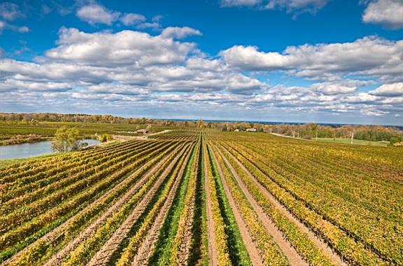 Flat Rock Vineyard, Twenty Mile Bench, Niagara PeninsulaPhoto: Brian Barton - Guelph, Ontario