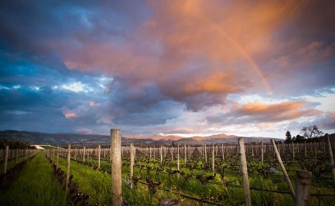 Opus One Vineyard Photo: http://en.opusonewinery.com/