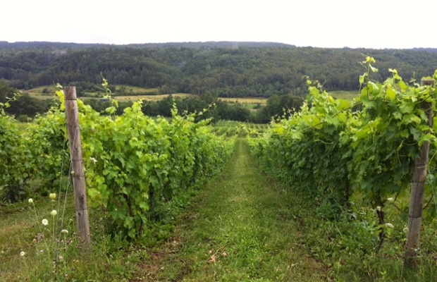 Benjamin Bridge Vineyard