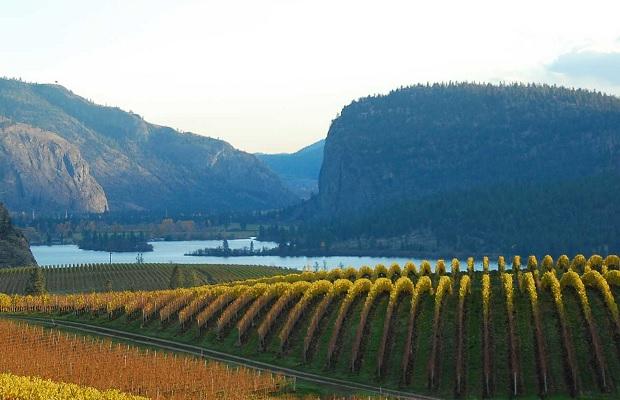Blue Mountain Vineyards Phoo: (c) www.bluemountainwinery.com