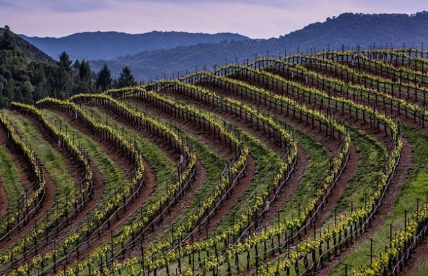 Sonoma County vines Photo (c): https://www.facebook.com/SonomaCountyVintners