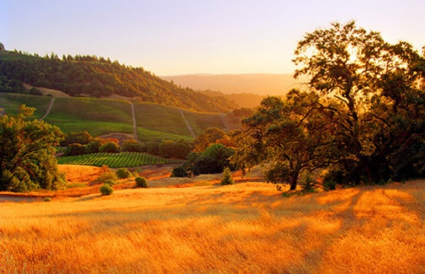 Sonoma County Photo (c): https://www.facebook.com/SonomaCountyVintners