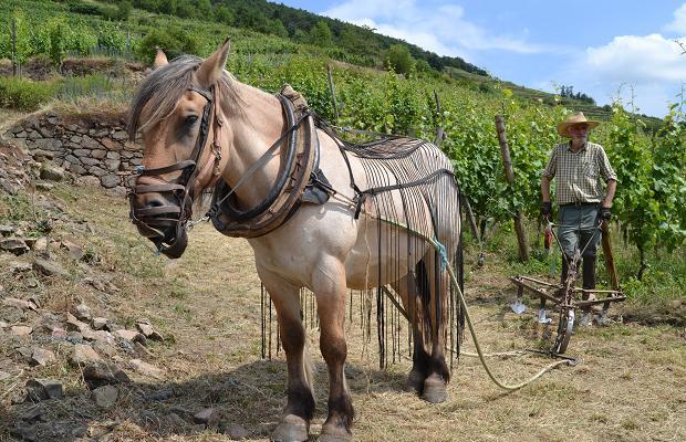 Schlossberg Horse, (c) Cassidy Havens, http://teuwen.com/