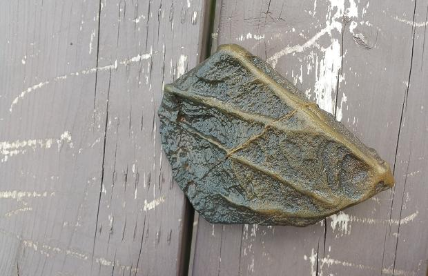 Fossil, Malpeque Bay, PEI