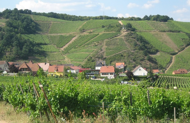 Niedermorschwihr and Sommerberg Grand Cru Vineyard, Alsace