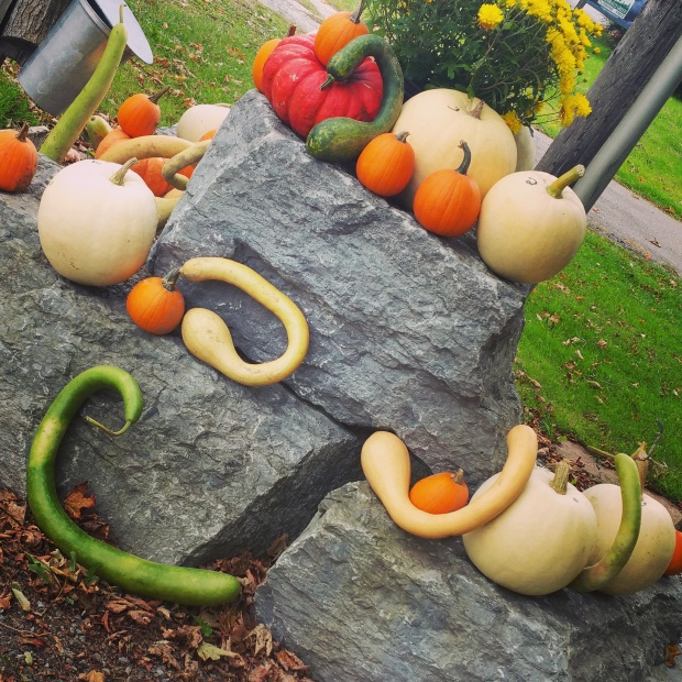 It's decorative gourd season mother... #cherryvalley #pec #colinnissan