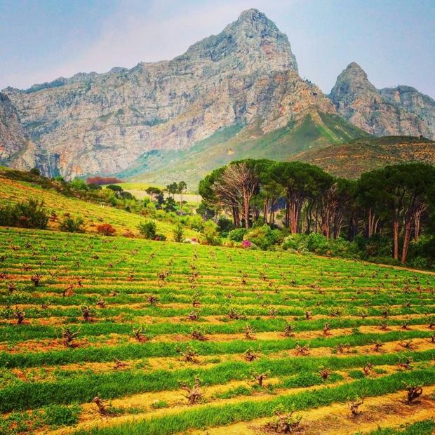 Bush vines, Groot Drakenstein Mountains @AnthonijRupert Wyne @WOSACanada #lormarins #franschhoek #southafrica #winesofsouthafrica #mesmerizing