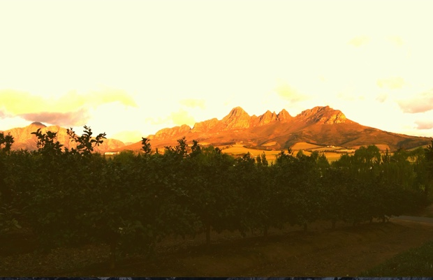The view from the Winery of Good Hope