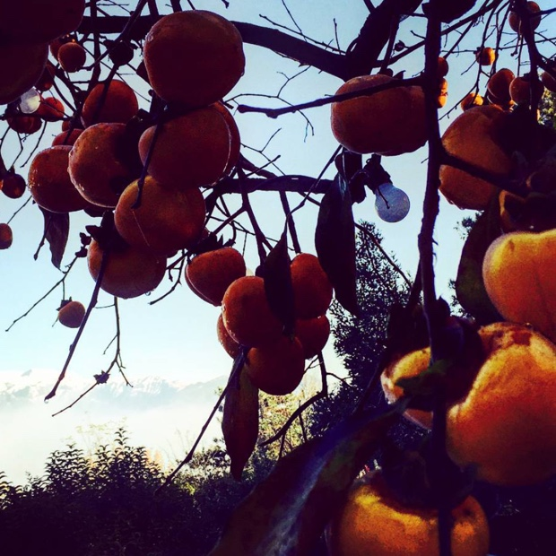 Persimmon and Dolomites. Must be #franciacorta #lalbereta #relaischateaux