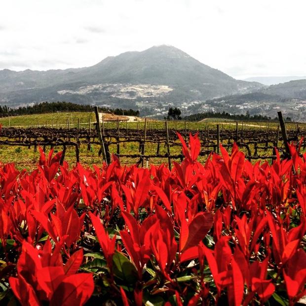 Colours of Quinta da Raza and Monte da Sr.ª da Graça #vinhoverde