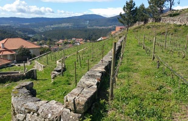 estate-vineyard-at-anselmo-mendes