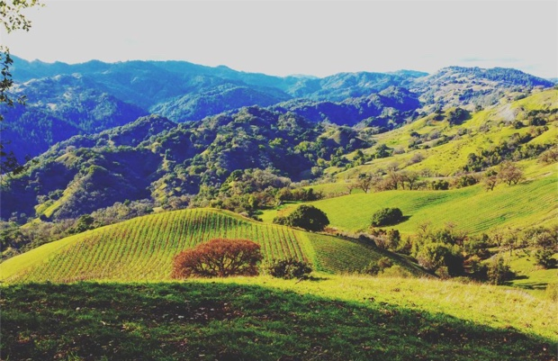 rockpile-ava-unparalleled-in-so-many-ways-mauritsonwinery-zinfandel-cabernetsauvignon-at-mauritson-rockpile-vineyard