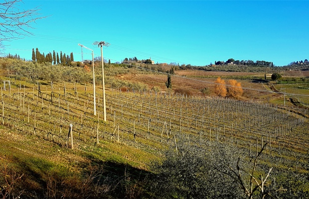 the-vineyard-at-il-molino-di-grace