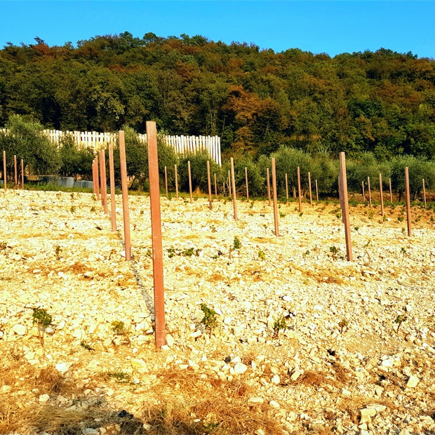 windswept-white-limestone-vineyard-at-massimago