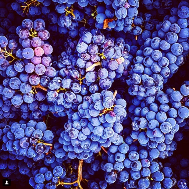 8fb1ae88c9ea Sangiovese is the future – Montefioralle, Greve in Chianti